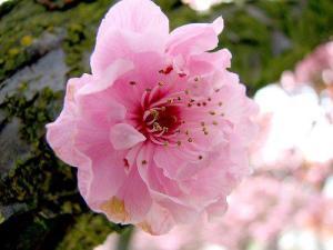 Flower 00