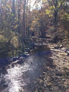Fall walk 6