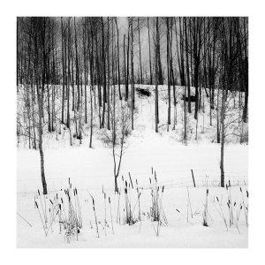 Winter 1 by Sasa Gyoker