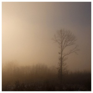Wet dawn by Sasa Gyoker