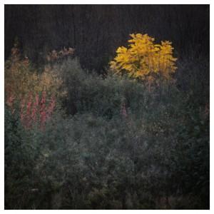 Oct 2014 By Sasa Gyoker